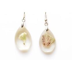 Corallina earrings