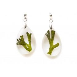 Codium earrings