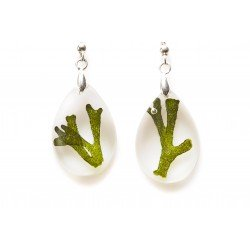 Codium earrings
