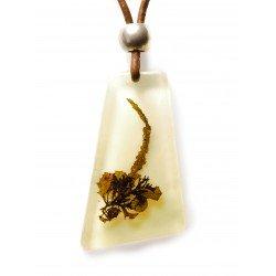 Collar Sargassum