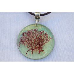 Sphaerococcus green necklace