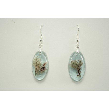 Plocamium earrings