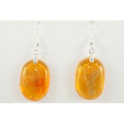 Corallina amber earrings